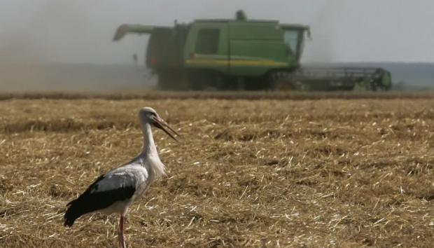 Украина собрала рекордный урожай зерновых / Фото УНИАН