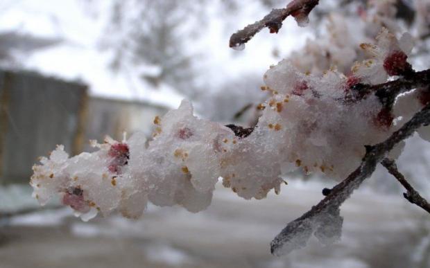У Чернівцях прогнозують мокрий сніг / УНІАН