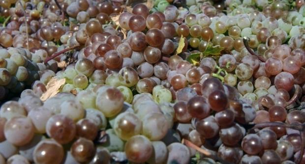 Одним из лучших источников линолевой кислоты является масло виноградных косточек / Фото: УНИАН