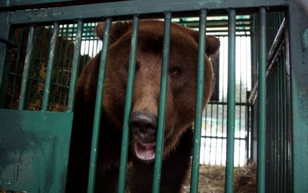 медведь / Фото: УНИАН