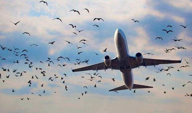 Три аэропорта закрыты до 16 декабря / cryptozoo.ru