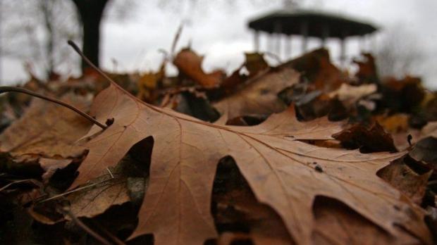 Спалювання листя призводить до забруднення атмосфери, води і грунту / Фото УНІАН
