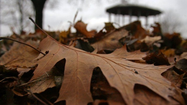 Міністерство енергетики та захисту довкілля України закликало не спалювати листя / фото УНІАН
