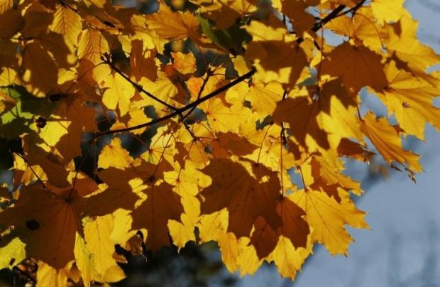 Спалювання листя у Києві заборонене / Фото УНІАН