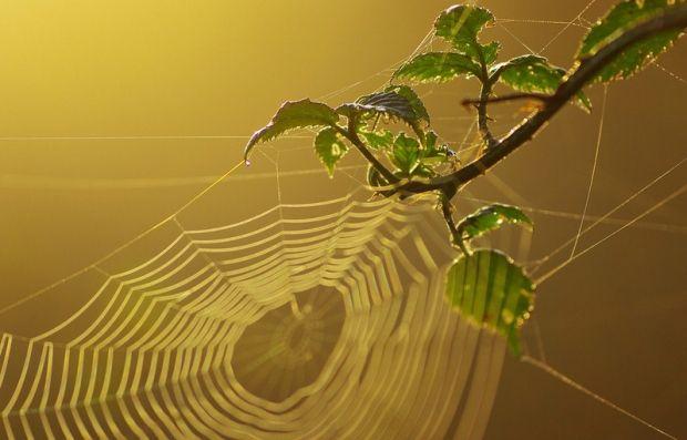 Павуки виділяють липку рідину, що містить заряджені полісахариди / flickr.com/photos/little_krawler