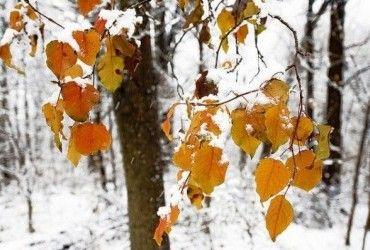 Дощ, сніг та морози: синоптик розповіла про погоду в Україні на найближчі дні