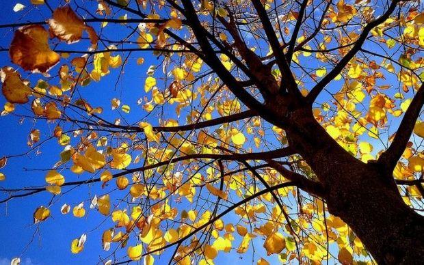 З'явився прогноз астрологів на день осіннього рівнодення / flickr.com/photos/42766545@N07