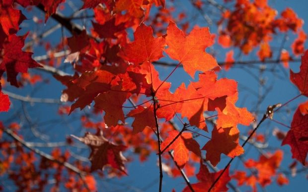 Не весь октябрь будет теплым, уже с 15 по 20 число прогнозируется снижение температуры / flickr.com/photos/sofh
