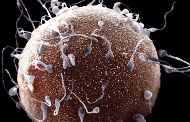 Ученые изучат первые семь дней жизни яйцеклетки после оплодотворения / Фото: popmech.ru