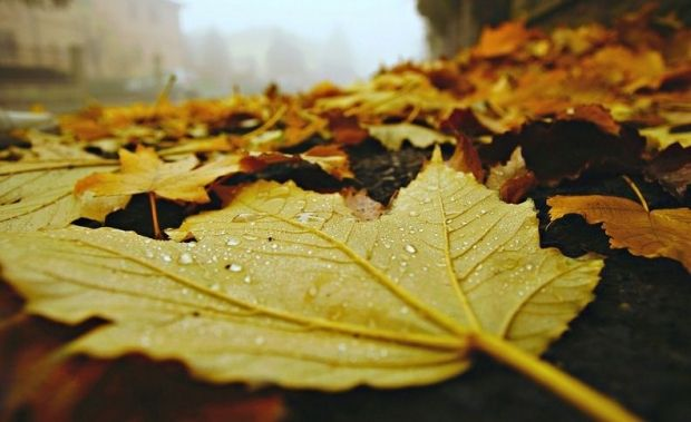 Сегодня во многих областях Украины пройдут небольшие дожди / фото flickr.com/photos/nikki