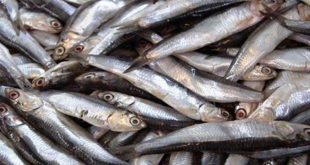 В Керчи переходят на рыбу / cit.ua