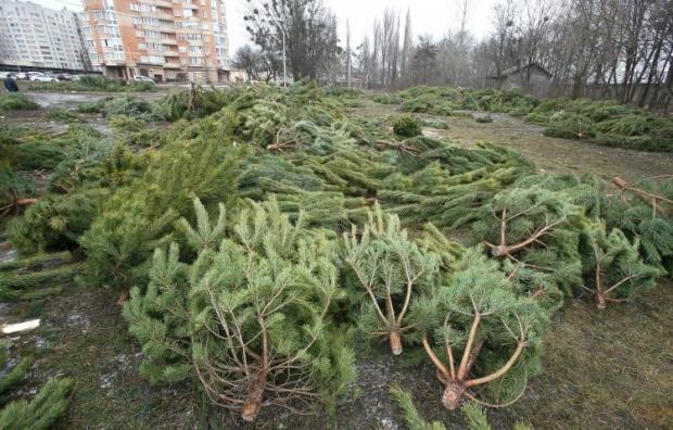 В одном из львовских парков елки будут красными / фото: УНИАН