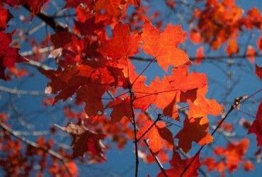 Здивує теплом: синоптики дали несподіваний прогноз на жовтень