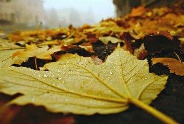 Тиждень в Україні почнеться з похолодання й дощів: прогноз погоди на 20 вересня (карта)