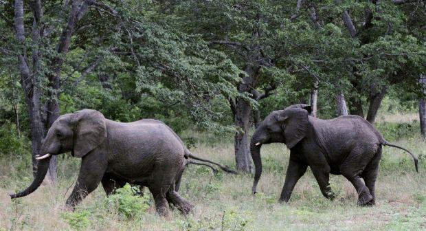 В Індії загинуло стадо слонів \ фото REUTERS