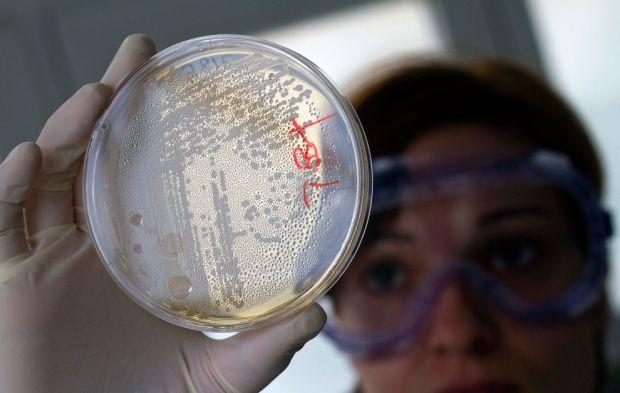 Бактерии обманывают антибиотики, меняя форму / Фото: boston.com