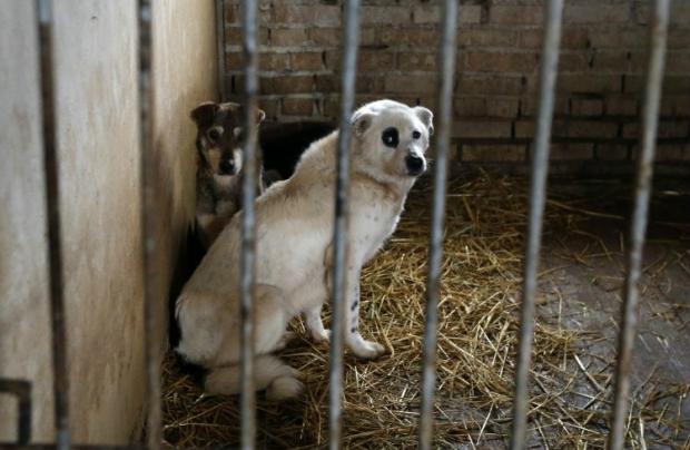 Гостомельский притулок для тварин / Фото УНІАН