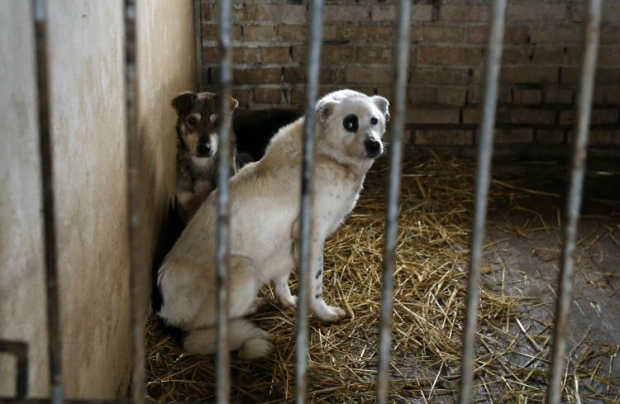 У Китаї щорічно їдять 10 млн собак \ Фото УНІАН