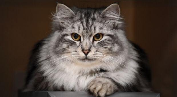 Всесвітній день кішки / фото koshki7.ru