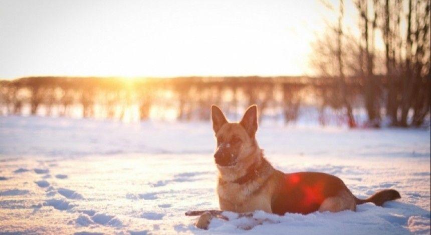 Замовне вбивство власної собаки: жителя Харкова засудили до трьох років в'язниці