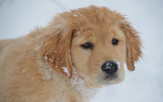 В Украине снова выпадет снег / flickr.com/photos/worshipbackgrounds