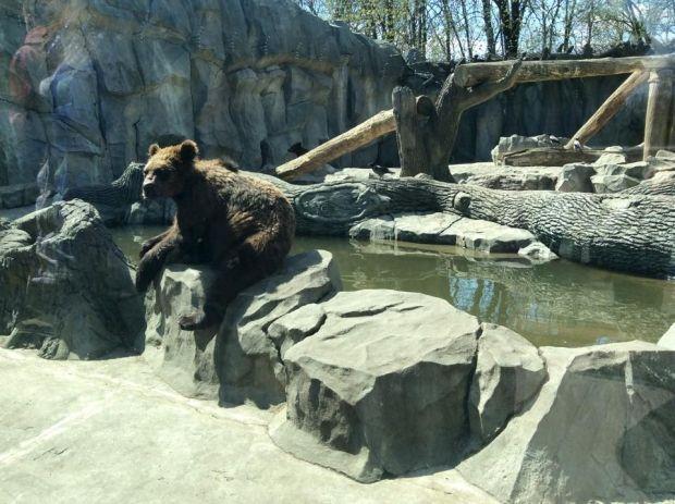 Медвежонок в киевском зоопарке / facebook.com/merkieva