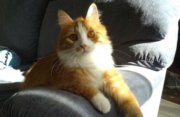В результаті частина котів з цього притулку вдалося врятувати / фото yle.fi