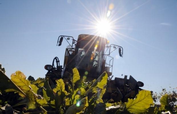 Аграрии начали уборку сахарной свеклы / фото УНИАН