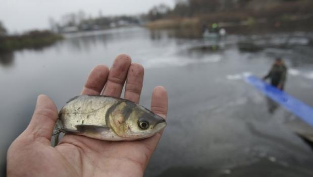 Рыба / Фото УНИАН