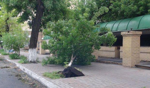 На мужчину упало 5-метровое дерево / Фото: УНИАН