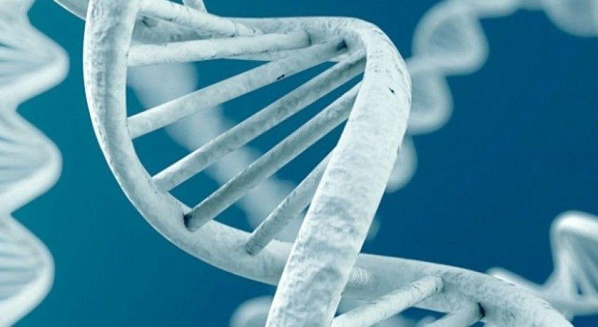 Генетики из США впервые редактировали геном в теле живого человека