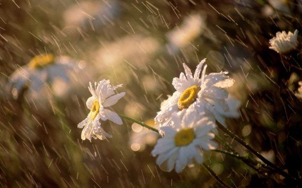 Сегодня на западе Украины будет много дождей / фото ТСН