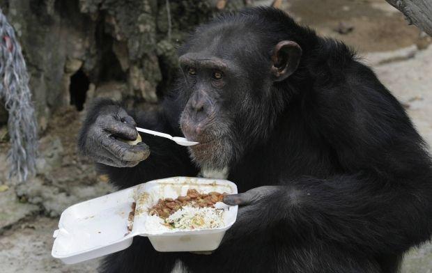 Такая реакция приматов на детеныша крайне нетипична / фото - REUTERS
