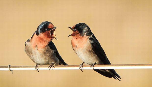 В мире насчитывается почти 11 000 известных видов птиц / moya-planeta.ru