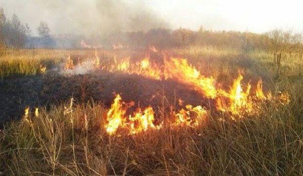 Надзвичайний рівень пожежної небезпеки збережеться в дев'яти областях України / facebook.com/MNSKyiv