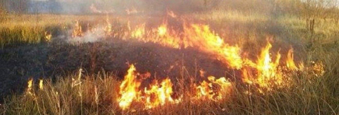 Спасатели предупреждают о пожарной опасности в Украине 12-14 августа