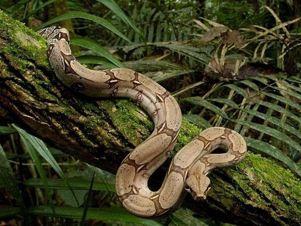 Длина пресмыкающегося - около шести метров / feldman-ecopark.com