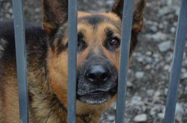 Животные схватили жертву зубами за одежду, затащили в свой лог и разорвали на части / фото УНИАН