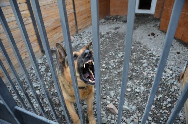 В России собаки чуть не загрызли ребенка / УНИАН