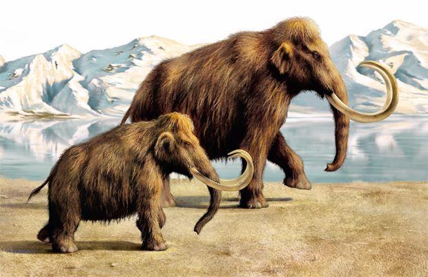 Останнім мамонтам на Землі досить довго вдавалося виживати в ізоляції на арктичному острові / vokrugsveta.ru