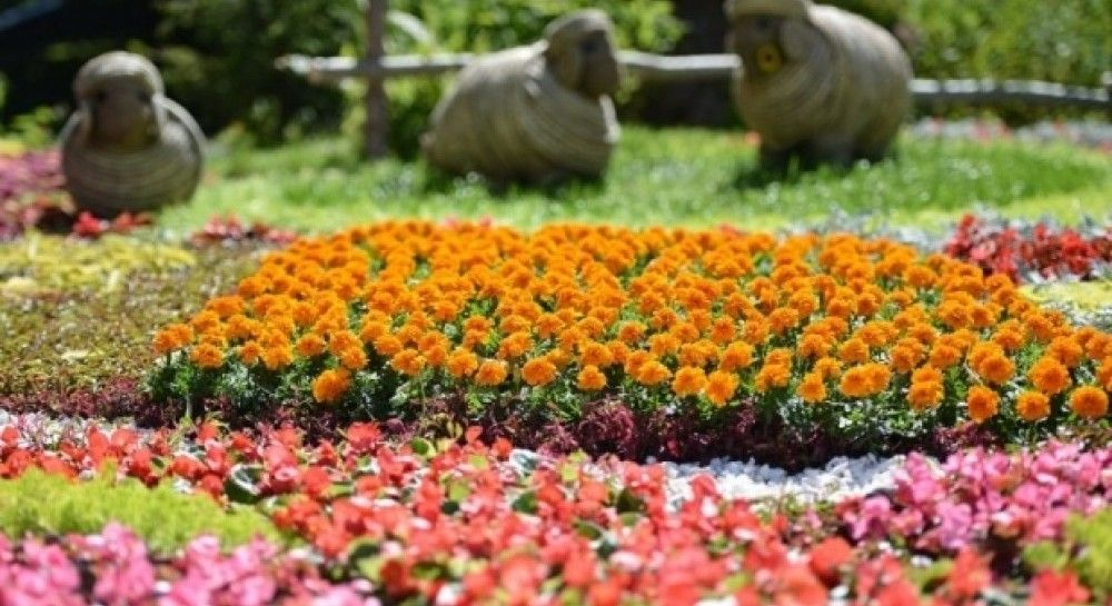 Flower exhibit blossoming at Spivoche Field in Kyiv