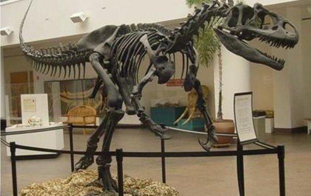 Вчені знайшли унікальний зразок шкіри динозавра / Фото www.maria-online.com