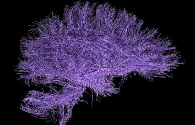 Так выглядит сеть нейронов в головном мозге человека / Фото: Laboratory of Neuro Imaging - UCLA