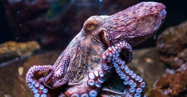 ВАвстралии отыскали «город осьминогов»