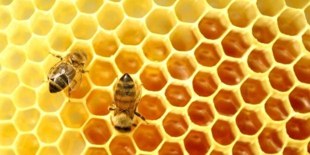 В половине проб российского меда выявлены следы антибиотиков / domowik.net