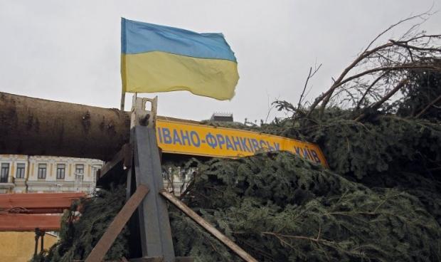 2 декабря елку првезуть в Киев / Фото УНИАН