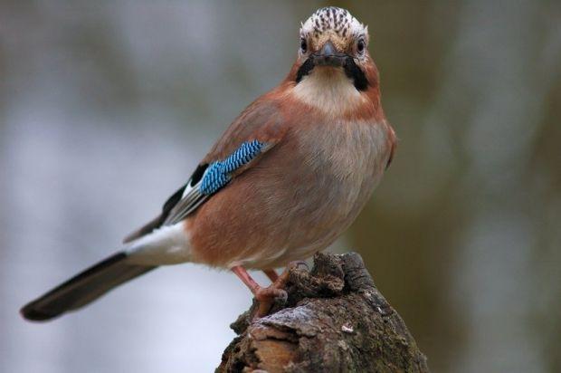 pticyrus.info