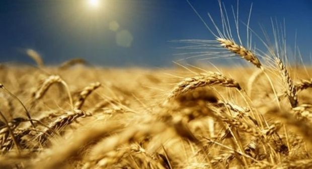 Ukraine will be provided in full with grain and oil until the next harvest / market.korupciya.com