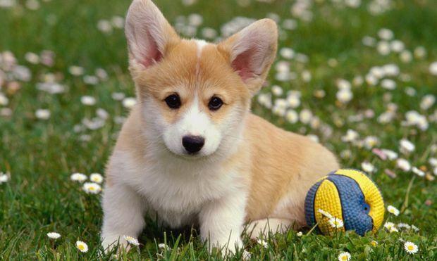 Устройство будет считывать эмоциональное состояние собаки / фото: explosion.com