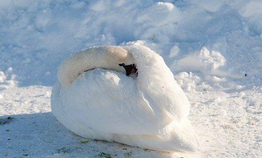 Птахи могли загинули через інфекційне захворювання / delfi.lv